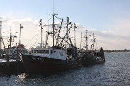 NE Groundfish Fishery